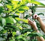 International standard proposed for plant breeders 'rights