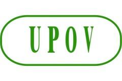 UPOV- ратификација од страна на Белгија