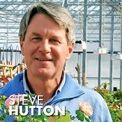 Steve Hutton